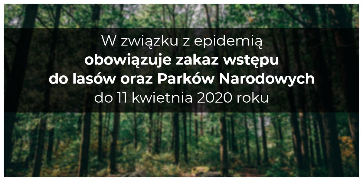 Wprowadzono zakaz wstępu do lasów - zdjęcie główne