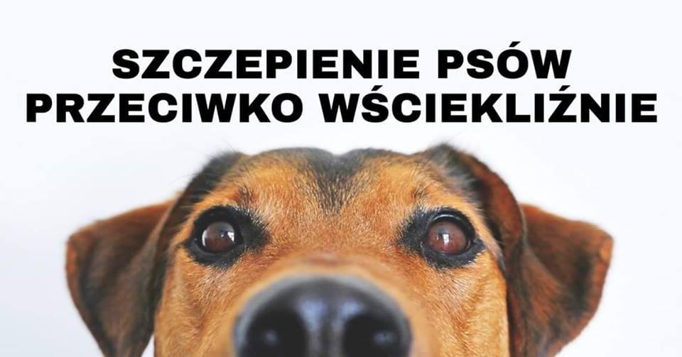 Obowiązek szczepienia psów przeciwko wściekliźnie - zdjęcie główne