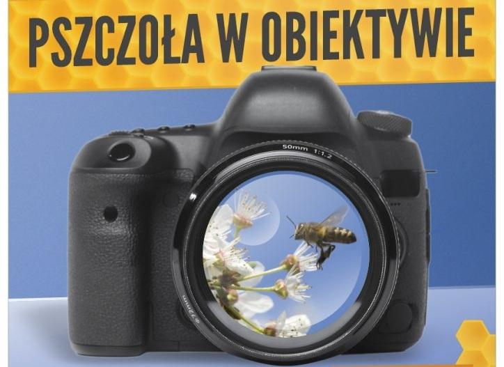 """LOT zaprasza do udziału w Konkursie Fotograficznym """"Pszczoła w obiektywie"""" - zdjęcie główne"""