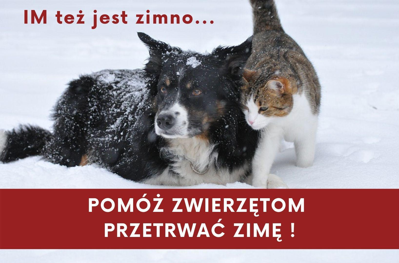 Pomóż zwierzętom przetrwać zimę - zdjęcie główne