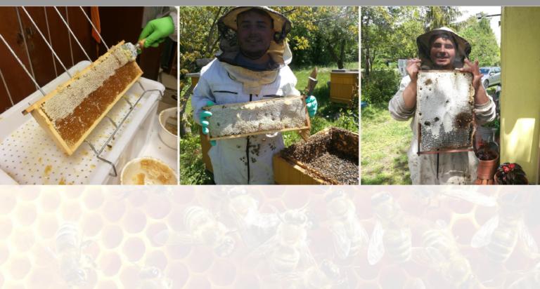 Połowa szkoleń w ramach I Powiatowej e-Konferencji Pszczelarskiej już za nami - zdjęcie główne