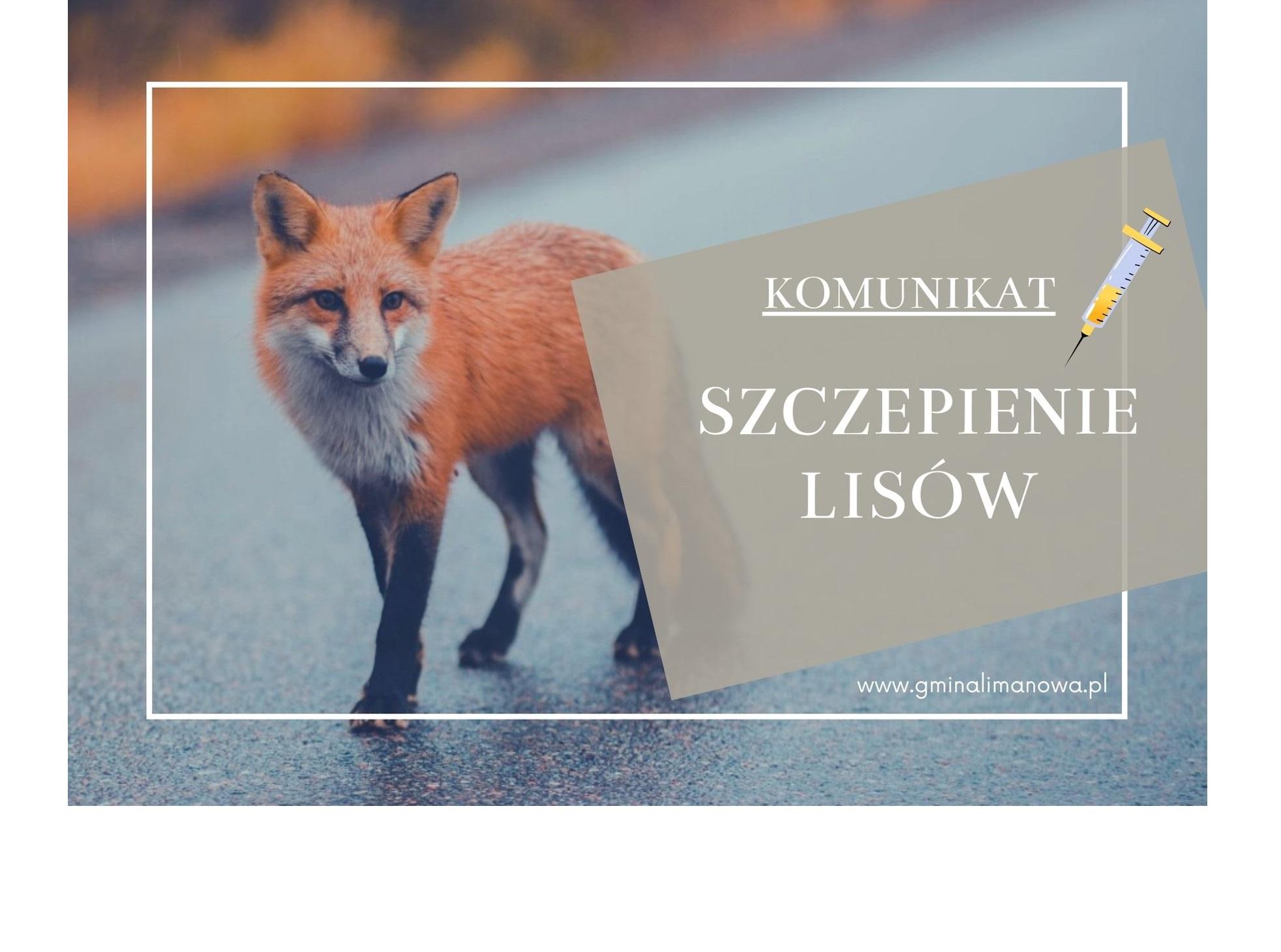 Komunikat Małopolskiego Wojewódzkiego Lekarza Weterynarii dotyczący szczepienia lisów - zdjęcie główne