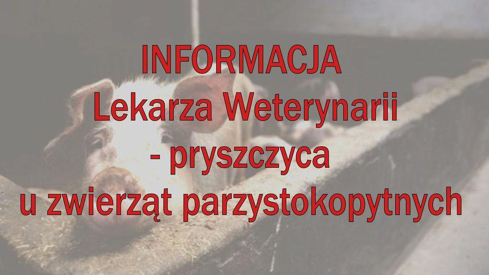Pryszczyca u zwierząt parzystokopytnych  - informacja lekarza weterynarii - zdjęcie główne